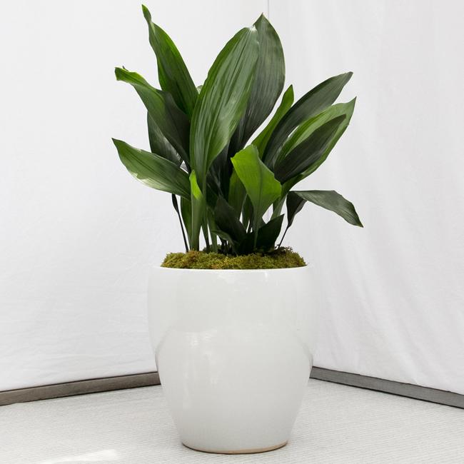 como cuidar plantas