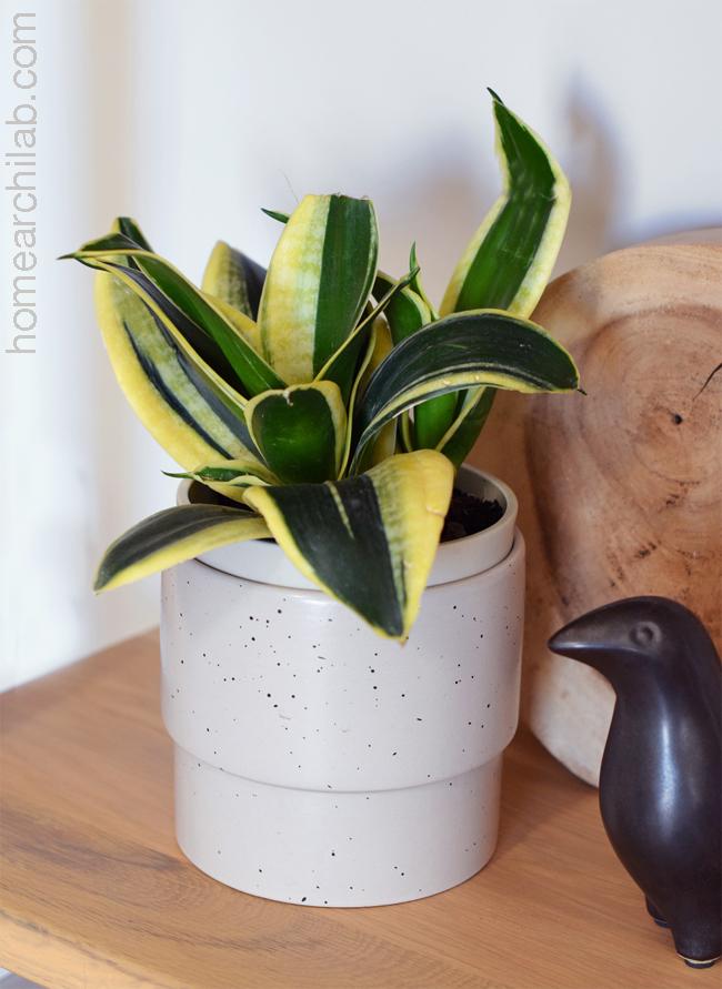 sansevieria plantas en casa