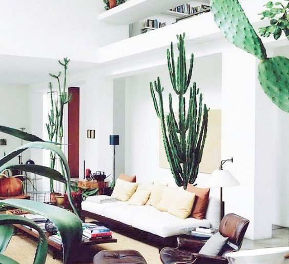 5x Grote plant in huis  HOMEASE