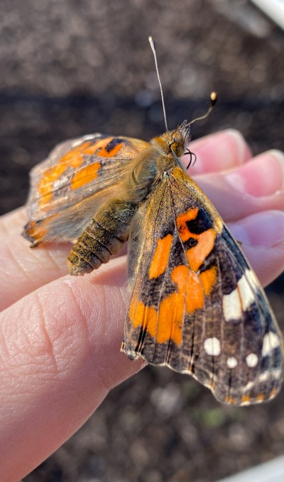 How Will You Measure Your Life?  Lessons from a Butterfly