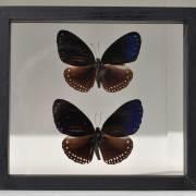 homebarn-single-framed-butterflies-4