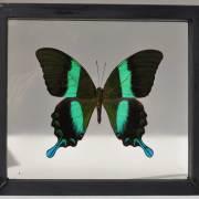 homebarn-single-framed-butterflies-7