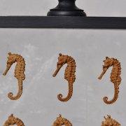 Sea Horse Curiosity Anthropological Specimen Case