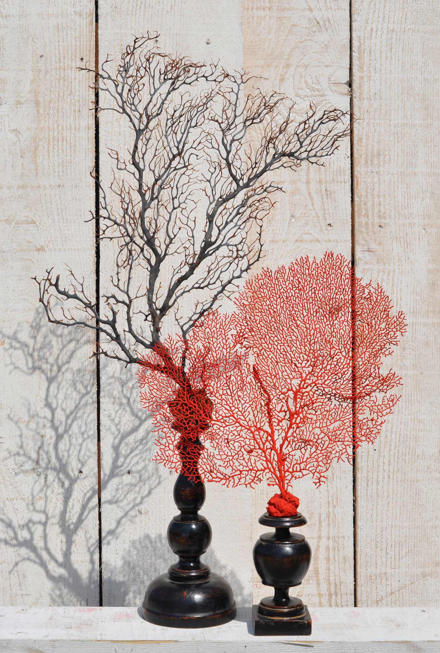 Placeholder Sea Fan Specimen On Timber Pedestal
