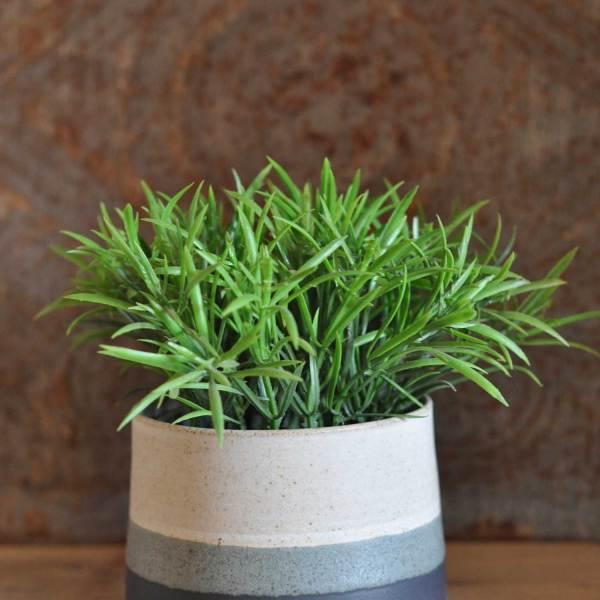 Hand thrown mini planter pot by Hilda Carr
