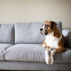 Leather Or Fabric Sofa For Dogs Havertys Payton Reviews Which One Should You Choose