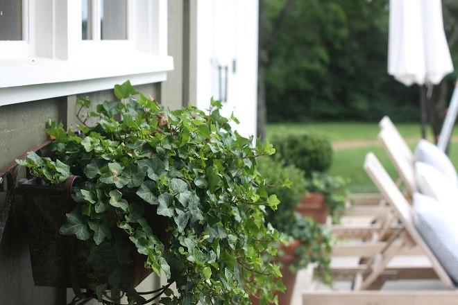 Window Planters. Window Planter Ideas. Window Planters #WindowPlanter #WindowPlanters Home Bunch's Beautiful Homes of Instagram @blessedmommatobabygirls