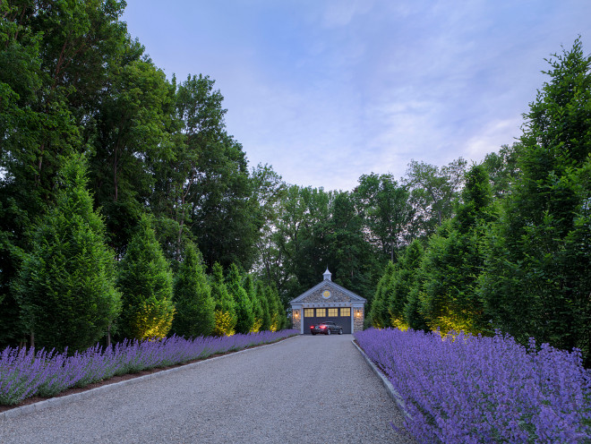Catmint nepeta Catmint nepeta Driveway with Catmint nepeta