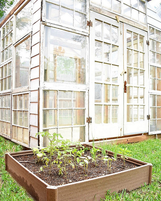 Greenhouse made out of salvage windows