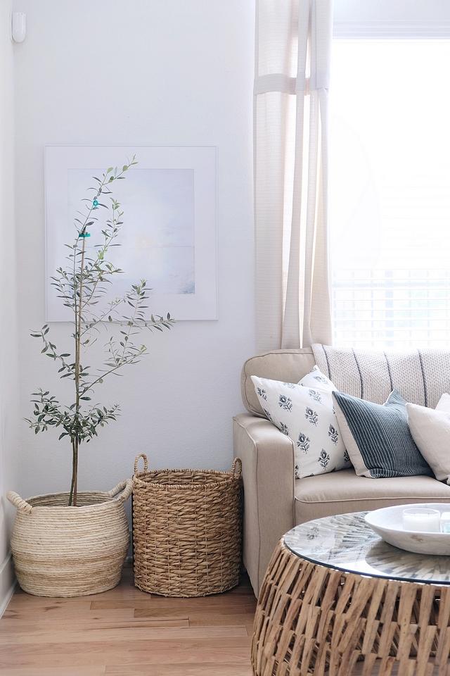 Olive Tree Indoor trees Olive Tree in large basket #OliveTree #indoortrees