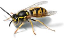 wasp-uk