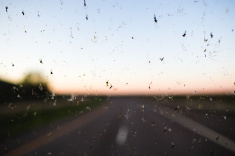 stock-photo-92967415-dead-bugs-on-a-windshield