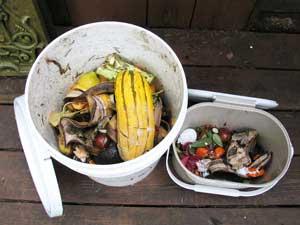 food scrap bucket
