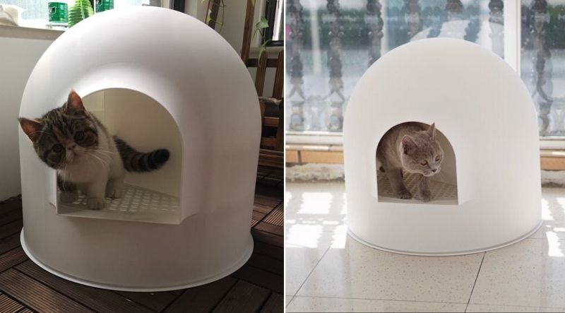 AwardWinning Igloo Cat Litter Box by Pidan Studio