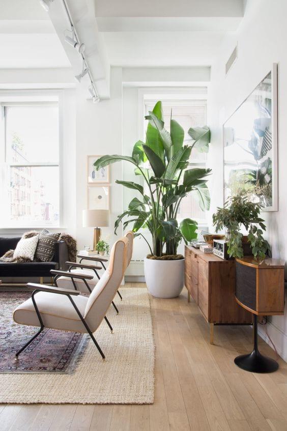 Inspiratie 4x een grote plant in huis  Homedeal NL
