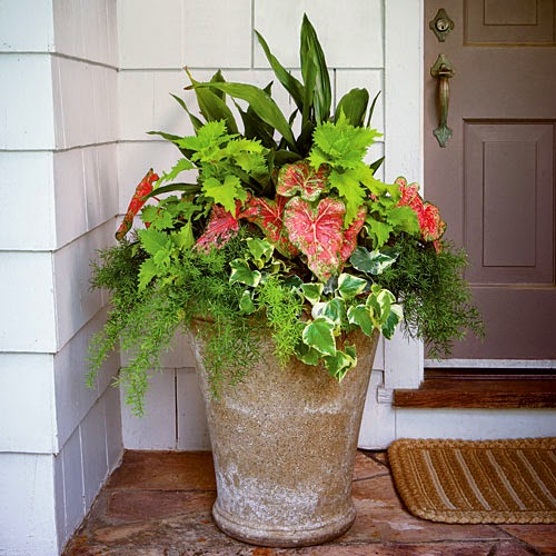 Container Plant Ideas Front Door: Front Yard Decor, Container Planters