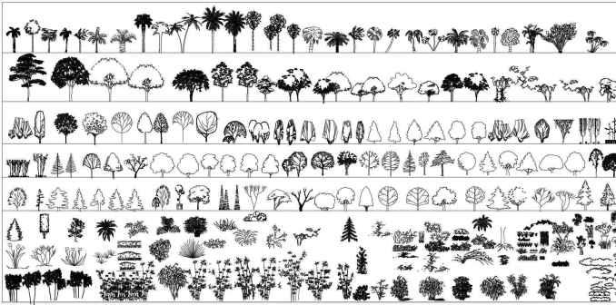 Tree Blocks-tree elevation