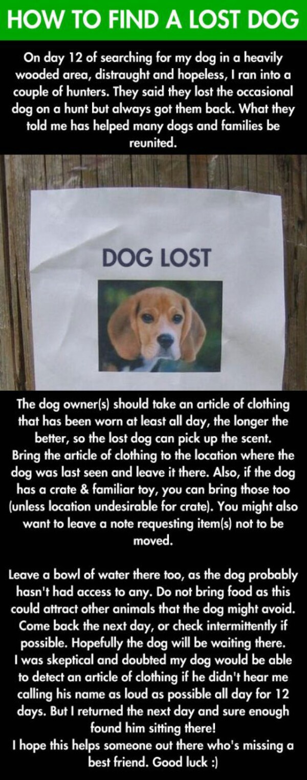 How to Find a Lost Dog