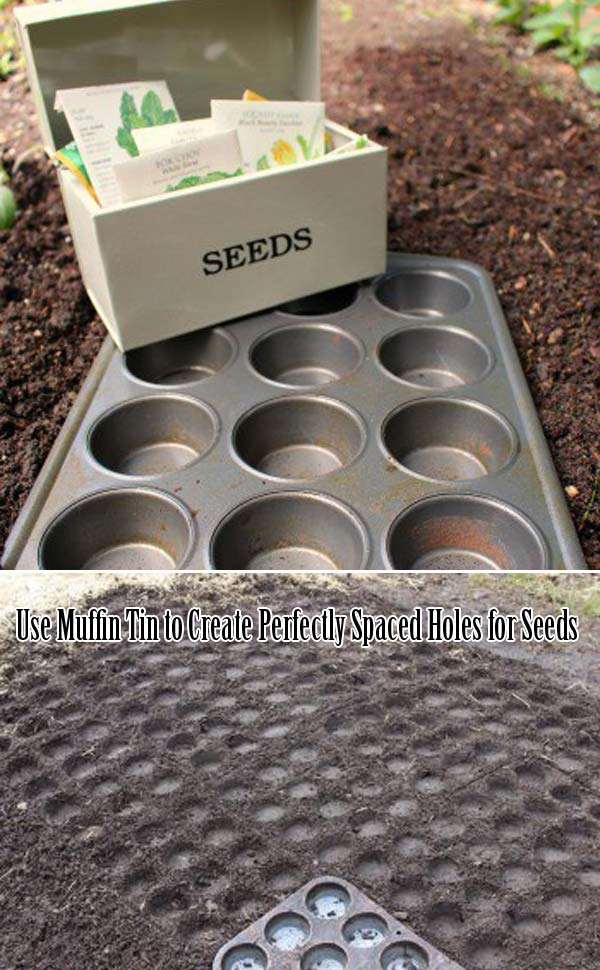 Use Muffin Tin to Create Spaced Holes for Seeds
