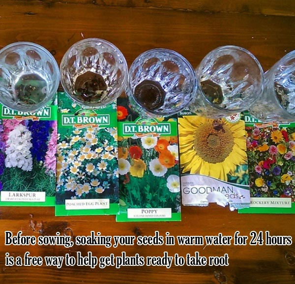 soaking your seeds in warm water
