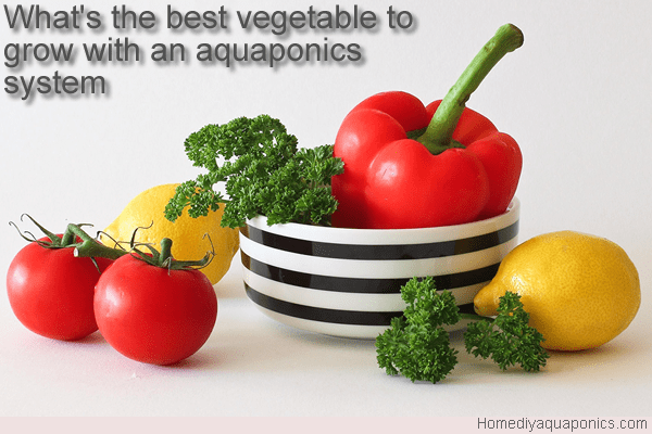 What's the best vegetable to grow with an aquaponics system