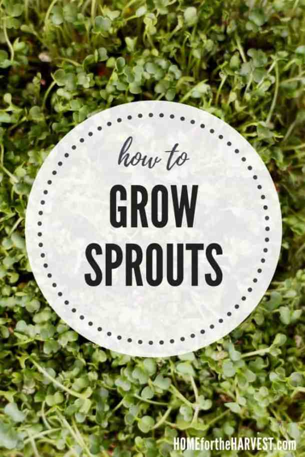 How to Grow Sprouts | Home for the Harvest