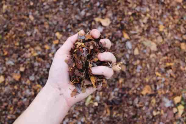Shredded Fall Leaves - Home for the Harvest Gardening Blog