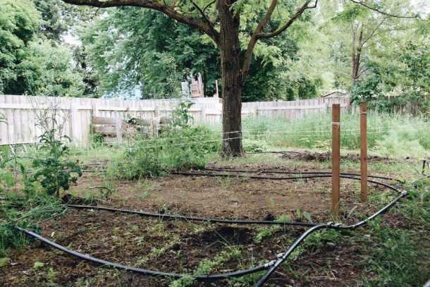 DIY Garden Drip Irrigation | Home for the Harvest Gardening Blog