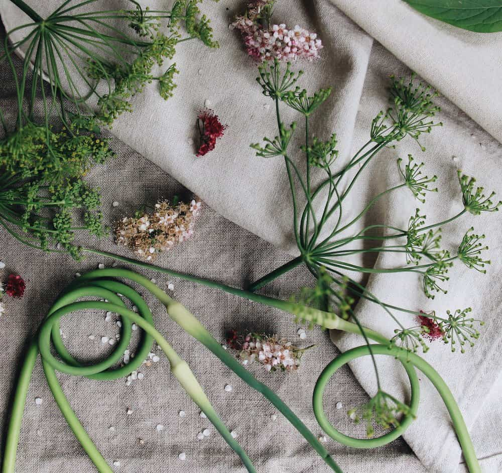 What are Garlic Scapes?