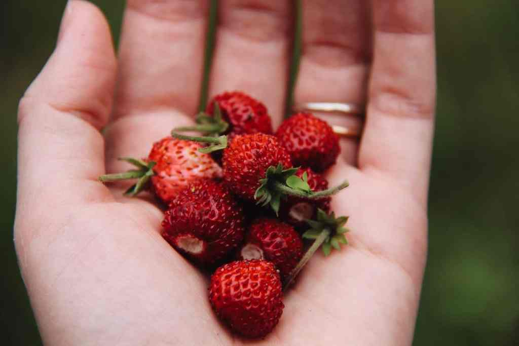 Alpine Strawberries: Easy to Grow and Absolutely Adorable