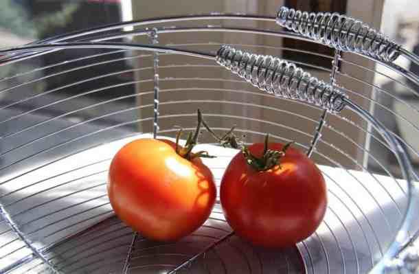 Harvested Bonny Best Tomatoes | Home for the Harvest Blog