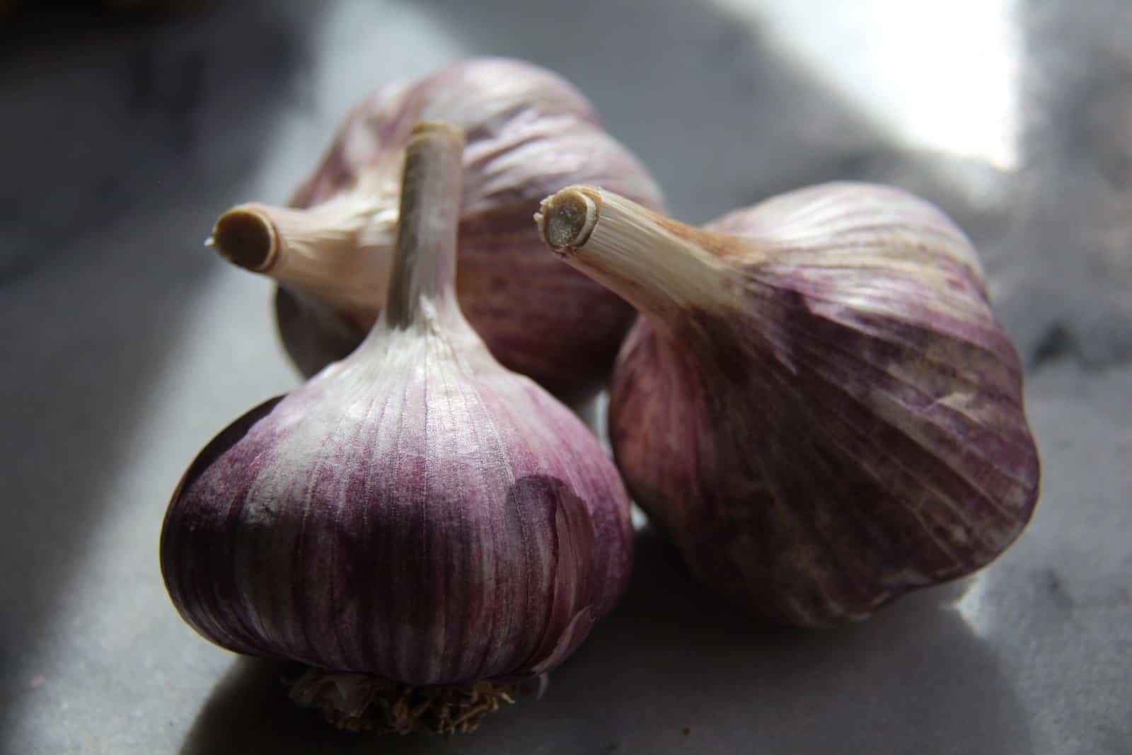 how to grow fresh organic garlic in your own backyard