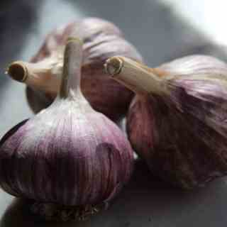 Organic Garlic Bulbs | Home for the Harvest