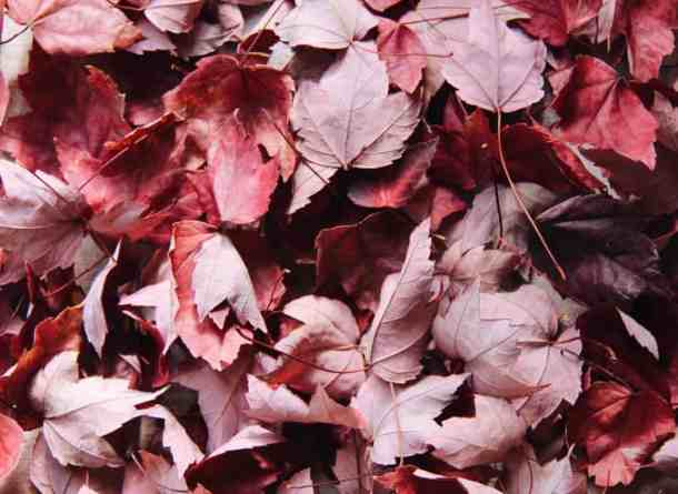 Red Autumn Leaves | Home for the Harvest Blog