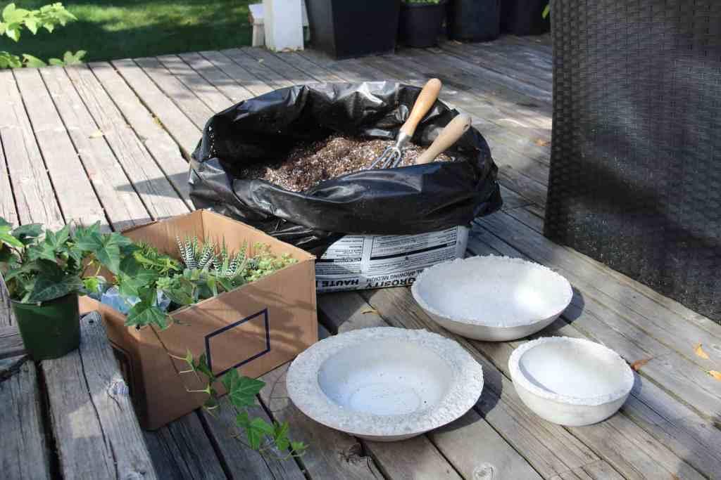 How To Plant Succulent Bowls