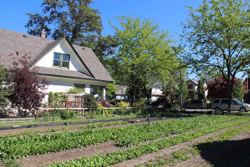 Flat-Earth Garden - The Best Types of Gardens | Home for the Harvest