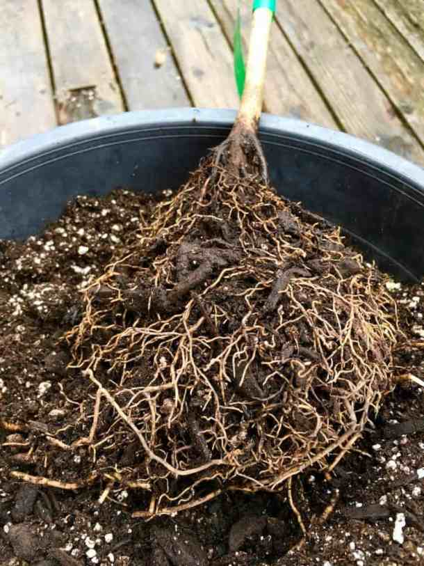 Bare Root Trees What Its Like To Order Trees Online Home For The
