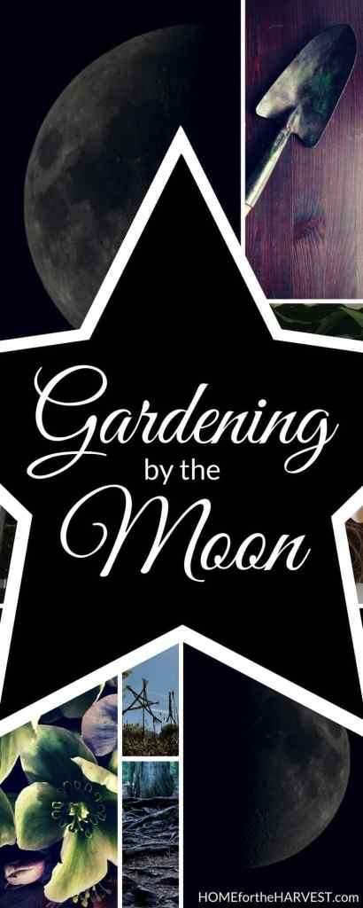 Gardening by the Moon | Home for the Harvest