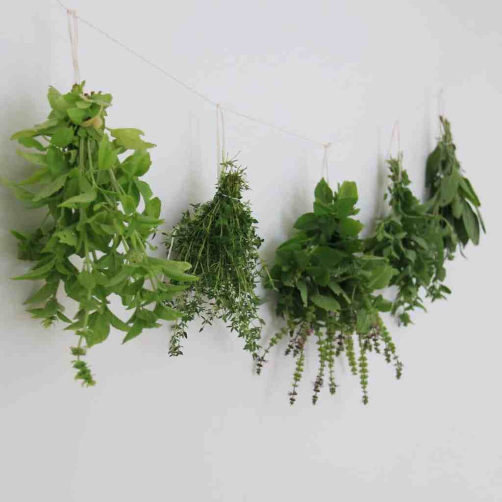 Growing Edible Herbs | Home for the Harvest