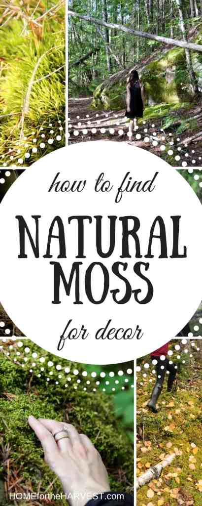 How to Find Natural Moss for Decor | Home for the Harvest