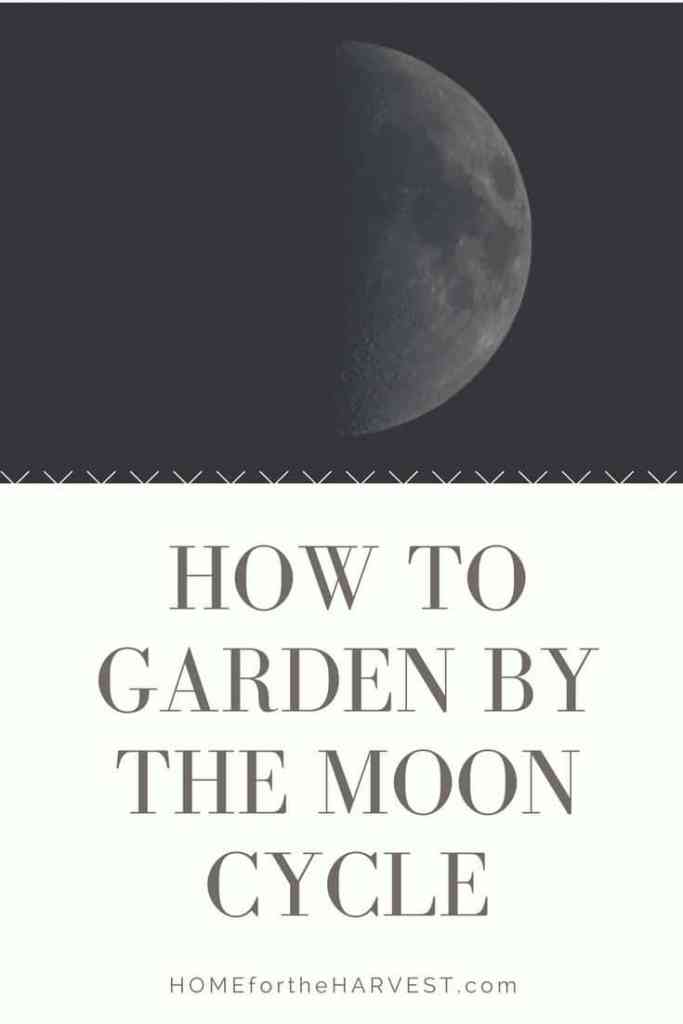 How to Garden by the Moon Cycle | Home for the Harvest