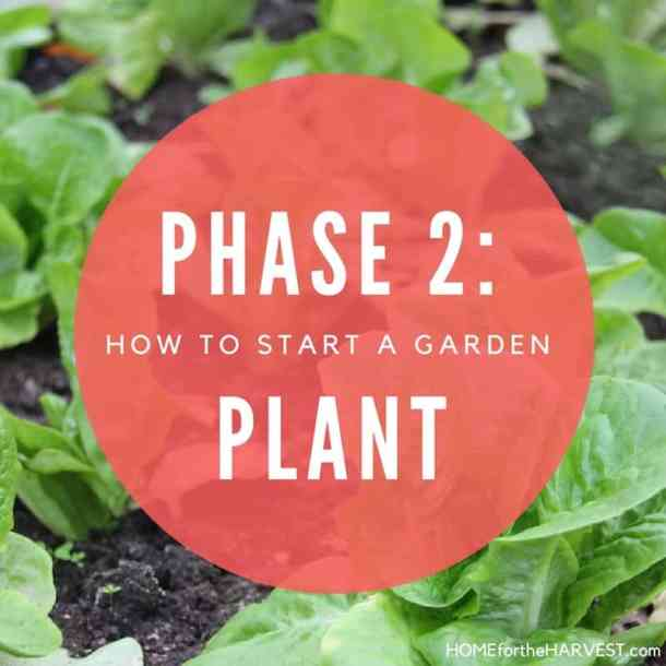 Phase 2: Plant the Garden - How to Start a Garden   Home for the Harvest