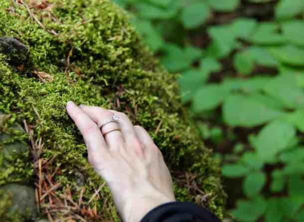 Where to Find Moss   Home for the Harvest