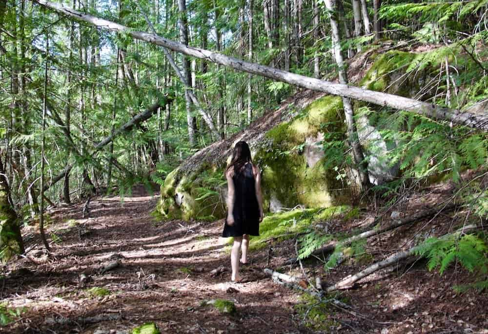Foraging for Moss: Where to Find Moss and How to Collect it