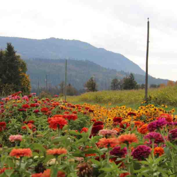 How to Start a Garden - Organic Gardening vs. Conventional Gardening   Home for the Harvest