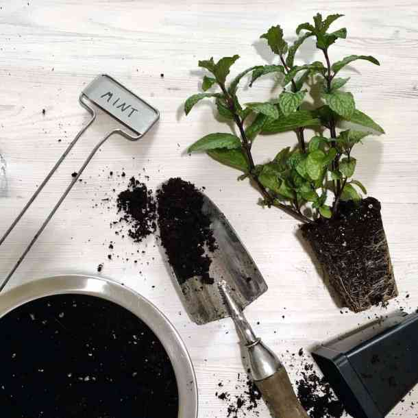 garden trowel and bowl of herb garden soil with herb plants and label for a herb