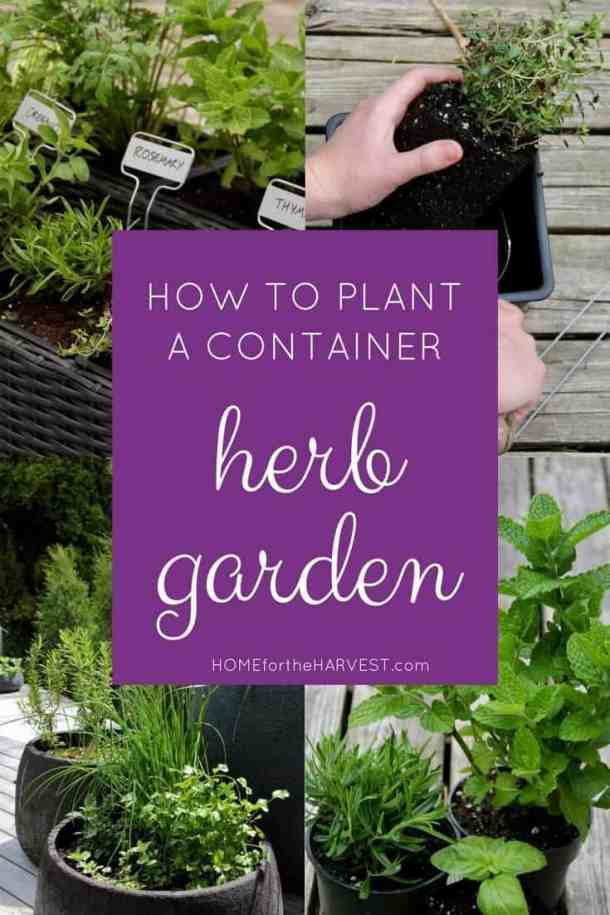 composite image showing how to plant a container herb garden