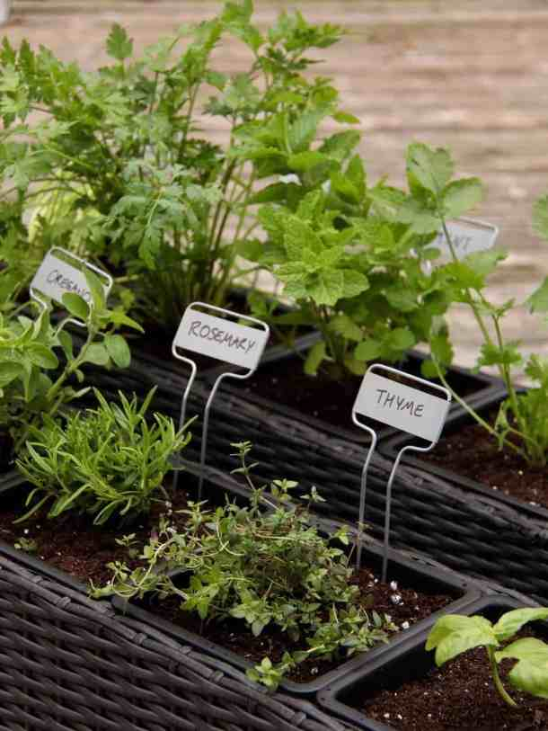 herb garden planter collection showing thyme, rosemary, mint, and other herb plants growing in a container herb garden on a wood deck