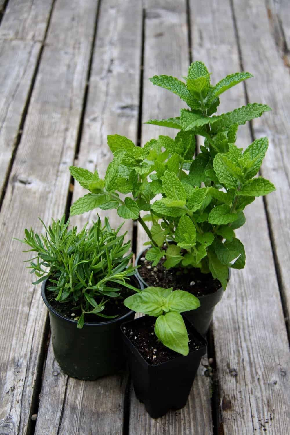 How To Plant An Organic Container Herb Garden Home For The Harvest
