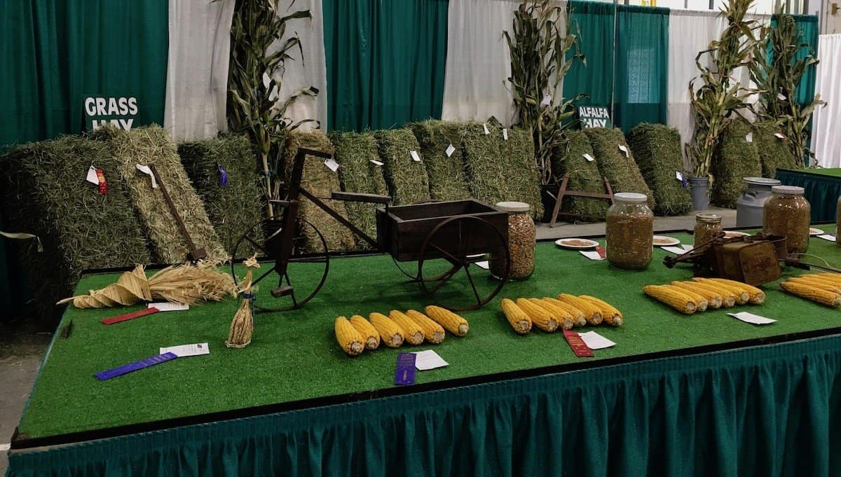 Harvest Season Fall Fair in our small town   Home for the Harvest
